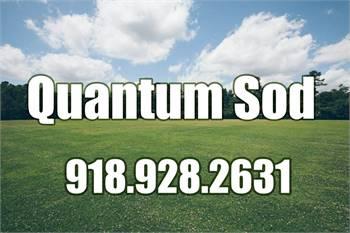 Quantum Sod